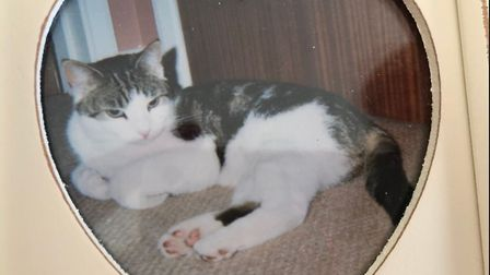 Peanut the cat is coming home! After 10 years the cat is being returned to his Ely owners who had gi