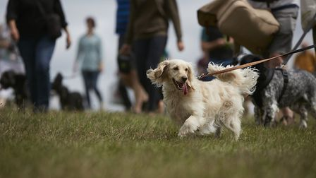 Vets in March have issued a warning to dog owners following a case of the deadly parvovirus disease