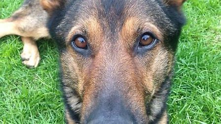 Police dog Finn has gone down in history for changing the law so that it is now an offence to cause