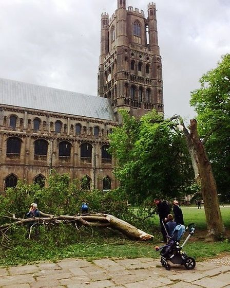 Children enjoyed an unexpected treat at the weekend as they clambered over a large tree that fell d
