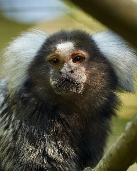 Some of the exotic animals rescued by the RSPCA in Cambridgeshire within the last year, new stats have revealed. Picture...