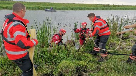 Firefighters were called to Holt Fen near Ely after reports of the animal being stuck in the water a