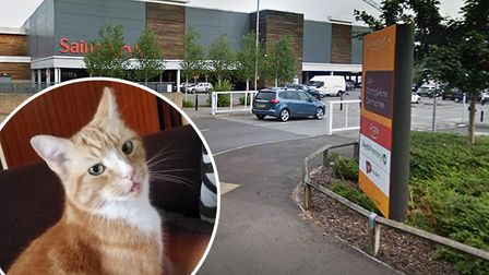 The late Garfield aka Mr Sainsburys who was killed after being struck by a car in the Ely supermarke