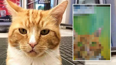 Hidden! The mystery painting of Garfield the cat by artist Rob Martin who is desperately looking to