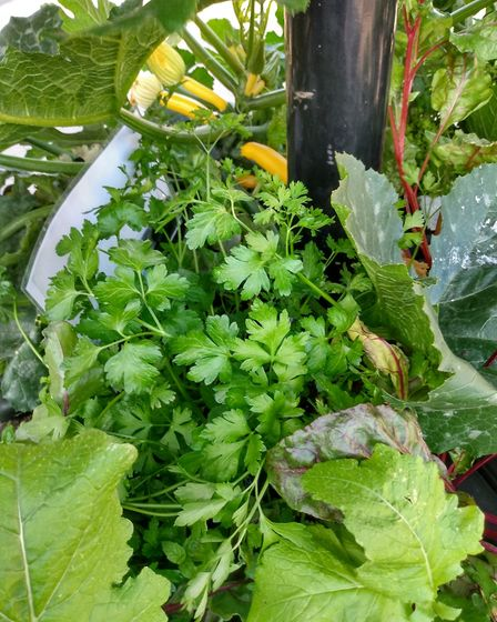 Some of the vegetables that have been growing in the planters. Picture: CONTRIBUTED
