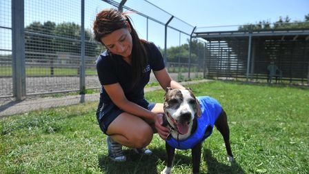 How will animals at RSPCA Block Fen be affected during the UK's heat wave? We went to find out. Pict
