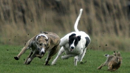 Numbers of hare coursing incidents in Cambridgeshire have dropped since last year, new figures sugge
