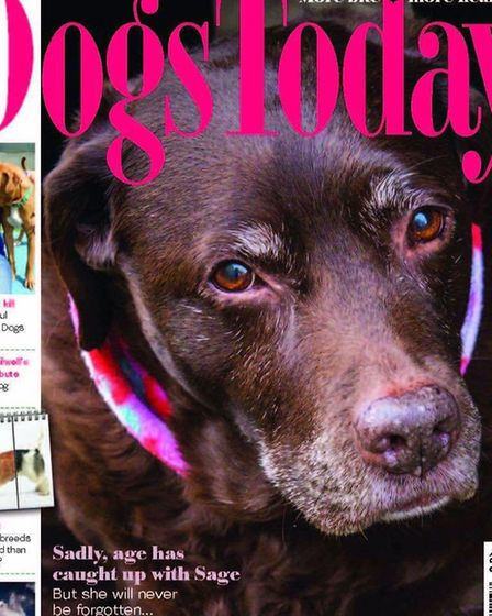 Following Sage's Way: A well-known East Cambs pooch who died in 2016 has had his online legacy conti