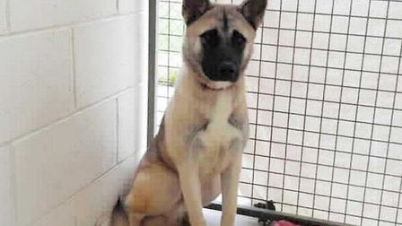 The RSPCA rescued 121 dogs from abuse and neglect in Cambridgeshire last year. Coco is in need of a