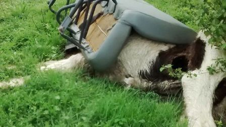 Equine crisis sees RSPCA rescue horses 'dumped like rubbish' in Cambridgeshire. Picture: RSPCA