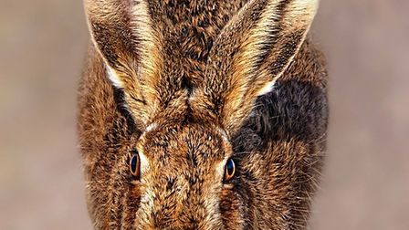 The winning entries of Ely Photographic Club's second image competition, including Head on Hare by K