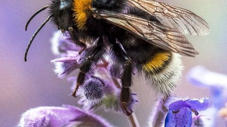 The winning entries of Ely Photographic Club's second image competition, including Bumble Bee by Bru