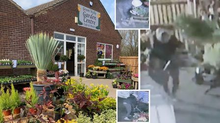 Thief caught on camera stealing plants and trees from the Green Welly Garden Centre in Chatteris. Pi
