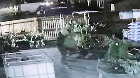 Thief caught on camera stealing plants and trees from the newly-opened Green Welly Garden Centre in