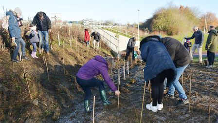 Eco Ely supporters plant trees on parkland on November 30. Picture: MIKE ROUSE