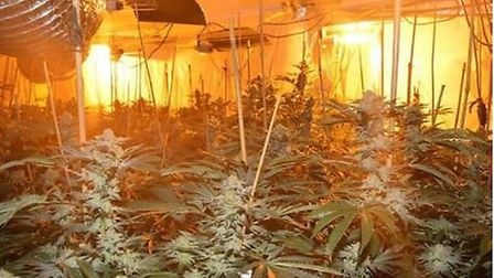 Ilir Aga, of Fordham Road, Newmarket, filled his four bedroom house and two outbuildings with cannab