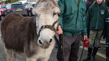 A real donkey took part. Picture: SAFFRON PHOTO