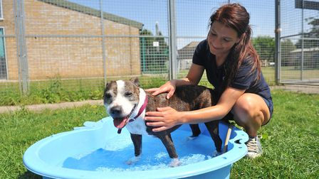 Reporter Dan Mason joined Harry Rutter at RSPCA Block Fen in Wimblington in the hot summer for some