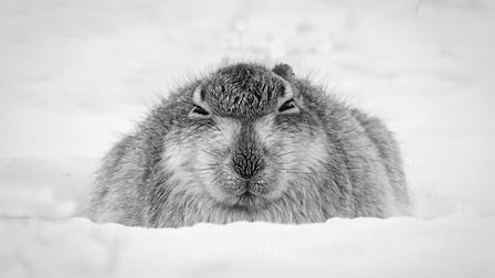 Some of the entries in Ely Photographic Club's Ken Hitch competition this year: Mountain Hare Hunker