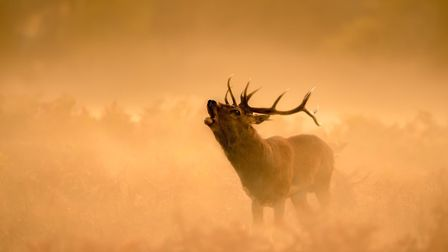 Some of the entries in Ely Photographic Club's Ken Hitch competition this year: Stag In Early Mornin