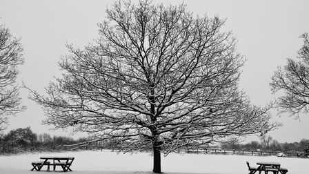 Some of the entries in Ely Photographic Clubs Ken Hitch competition this year: No Picnics Today by S