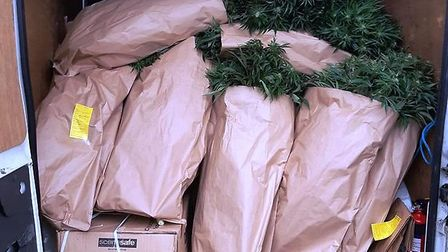 Massive find by Cambs police of cannabis plants growing at a Chatteris house. Picture; FEN COPS