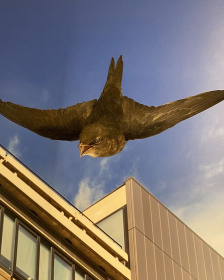 Birds from Wicken Fen Nature Reserve have their own spot inside the University Museum of Zoology's n