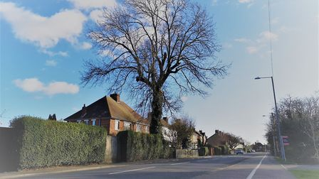 They thought it was a walnut tree - and protected. But 30 years later a case of mistaken identity ha