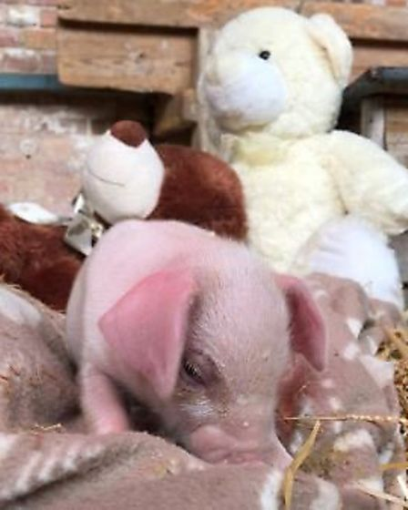 £5,000 is desperately needed to feed the animals and pay a small team at South Angle Park Farm – oth