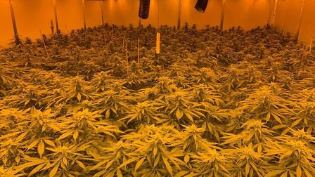 Rural police officers in Cambridgeshire have dismantled £1.2 million in drug factories and issued mo