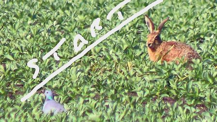 Chatteris photographer and postman Martyn Jolley captioned this photo 'Dove and Hare at the starting