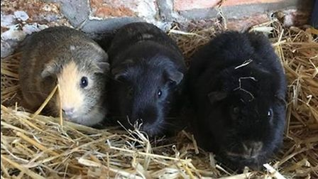 South Angle Park Farm in Soham needs just £400 to reach the £5,000 fundraising target that is needed
