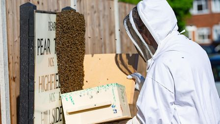 Beekeeper Mike Lewin is called into rehome a swarm of approx 6-7000 bees from a street sign.,Yaxley,