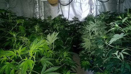 An industrial unit containing cannabis plants worth up to £42,000 was discovered on Fen Road, Milton