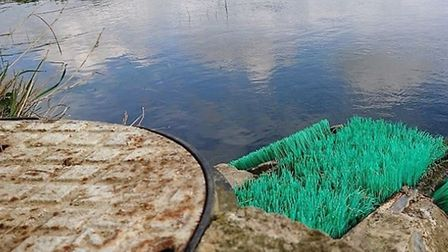 Environment Agency officers have welcomed the arrival of elvers (juvenile eels) for the first time t