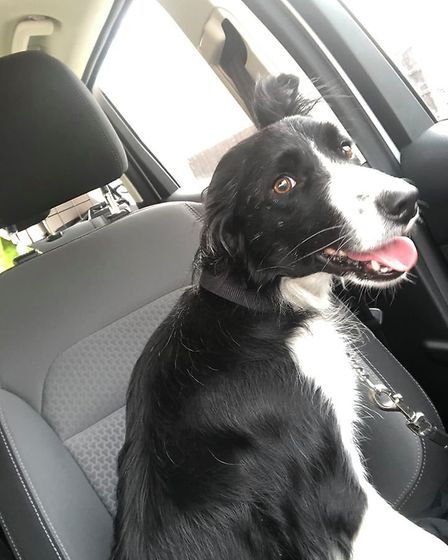 Molly is back with her owners after a ride in a police car and a round trip from Whittlesey to March