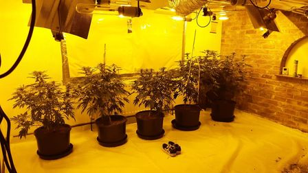 Over the Bank Holiday weekend three cannabis factories were uncoveredNew Hall Lane, Cambourne - 71