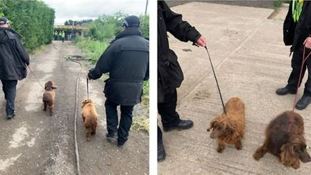 In Willingham Cambs Police reported that 'Tilly and Abba, two beautiful cocker spaniels were found d
