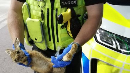 The Leveret was found inside this Mercedes 4x4 which was later linked to a number of hare coursing i