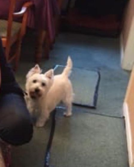 Dogs stolen from Cosy Kennels in Cambridge Road, Stretham. Picture: Facebook/Nicola Scarrow