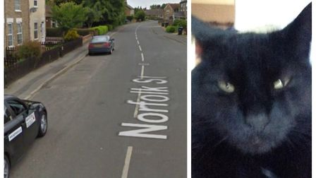 An attempted cat theft was reported on Norfolk Street, Wimblington (left) where a woman was thought