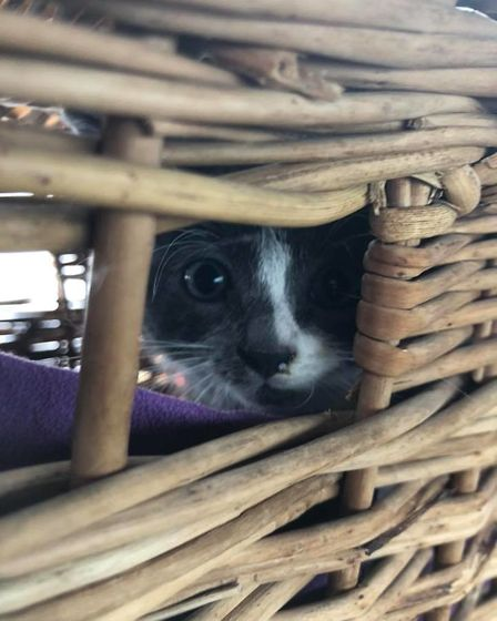 This kitten trapped underneath a car in Willingham was rescued by firefighters after it was stuck fo