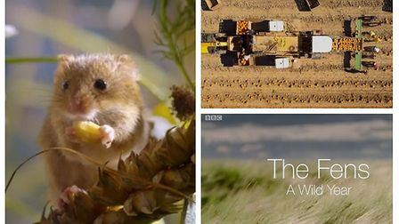 BBC documentary 'A Wild Year' featured the Fens in its last episode. Pictures: BBC iPlayer