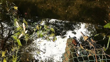 Several hundred dead fish floated to the service of the River Nene in March after being killed by a