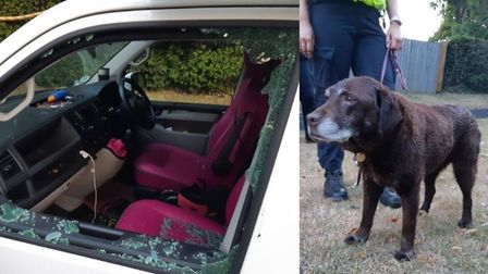A dog that had been left in a van for 45 minutes during Wednesday's (August 12) extremely warm weath