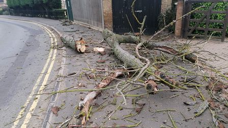 Roger Newark, of Benwick Road, Doddington, has welcomed the removal of a historic tree after one of