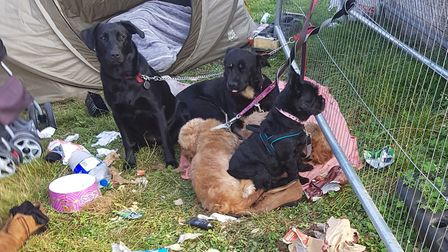 """The RSCPA are dealing with reports of dogs kept in """"inhumane"""" conditions at Jubilee Gardens in Ely."""