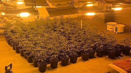 Around 160,000 worth of cannabis plants were found in a property on Sixteen Foot Bank in Christchurc