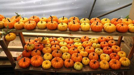 This year's harvest of mini pumpkins. Picture: The Gardens of Easton Lodge