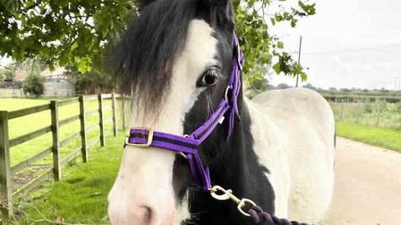 The RSPCA has launched their Adoptober campaign in order to tackle the rising numbers of horses bein
